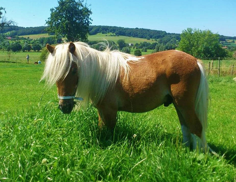 pony op camping limburg