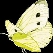 vlinder-oosterberg